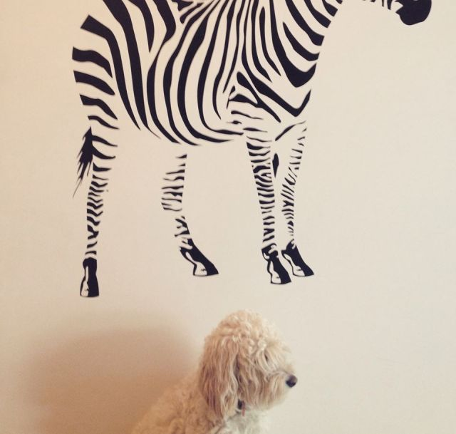 My dog, Bernie, underneath a decal of a zebra